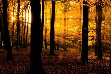 Hora Bos Autumn Sunrays sur Joram Janssen