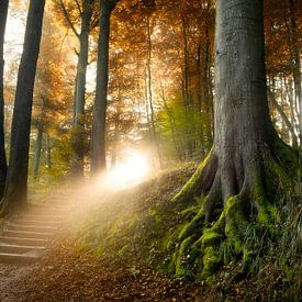 Stairway to Heaven van Arjen Roos