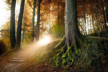 Stairway to Heaven von Arjen Roos