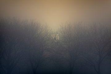 Net opkomende zon door de mist en bomen van Rene  den Engelsman
