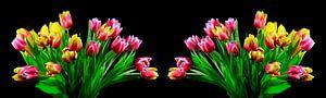 Tulpenblütenpanorama
