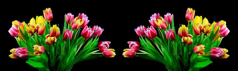 Tulpenblütenpanorama von Thomas Jäger
