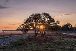 Zons opkomst op de Heide bij Theehuis 't Bluk in Laren