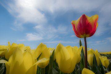 Tulpenland von Moetwil en van Dijk - Fotografie
