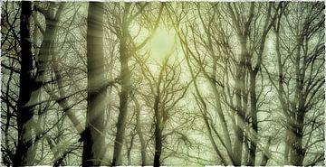 Mystic Woods, Plasmolen van Jeroen Hoogakker