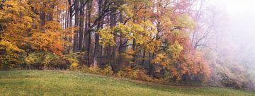 Wald im Herbstnebel von Tobias Luxberg