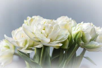 Lentebloemen witte pioentulpen in de vaas op lichte achtergrond in de zon van Idema Media