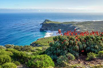 Kaap de Goede Hoop van Nico  Calandra