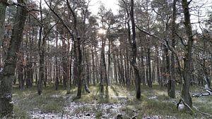 Winterbos Deelerwoud van