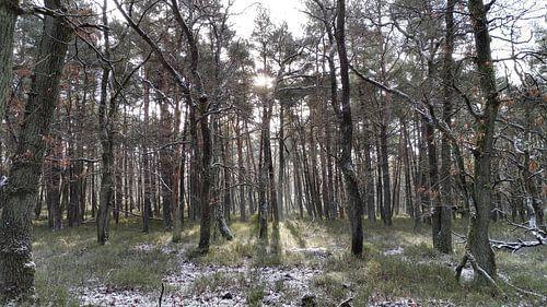 Winterbos Deelerwoud