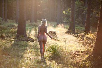 Morgenlicht im Harz von Vincent van Thom