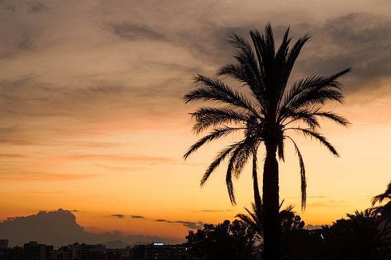 Palmboom tijdens een zonsondergang
