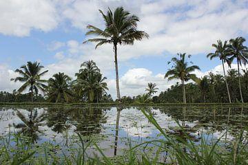 Indonesië: Rijstvelden van Raoul van de Weg