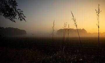 zonsopkomst bos van Karin vanBijleveltFotografie