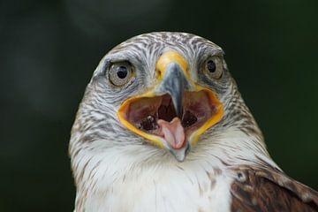 Roofvogel van G.m. Seuren