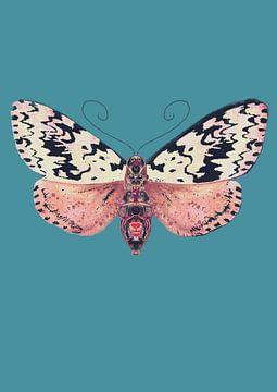 Motte schwarze Flecken von Angela Peters