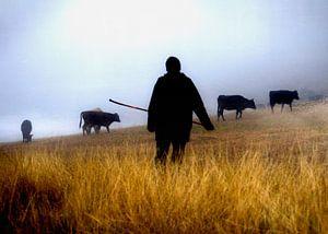 Herder in Georgië in de mist van