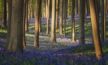 Swingende Blue Bells van Joris Pannemans - Loris Photography