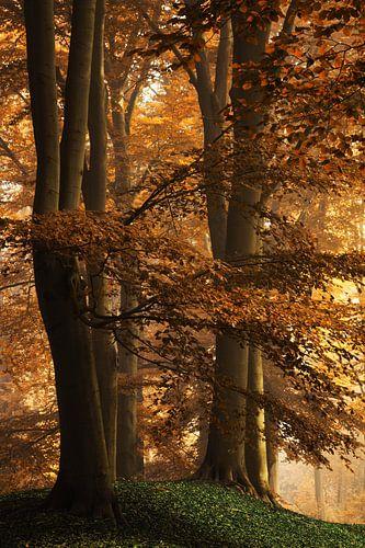 Autumn's Kiss van Martin Podt