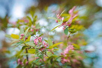 Glossy Spring van Hiske Boon
