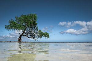 Onondekte 'Wanaka Tree' in de Filipijnen van