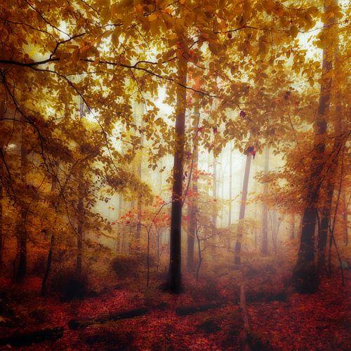 Forest in Autumn Colours van Dirk Wüstenhagen
