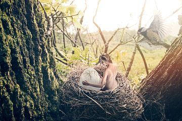 Das Nest von Ralf Onvlee