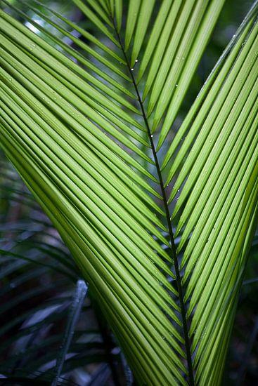 Palmblad na regenbui in Australië
