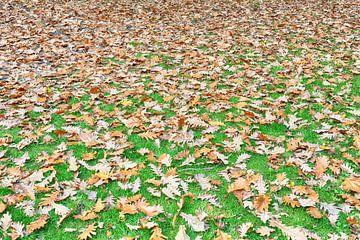 Herfst komt eraan van Ronald Smits