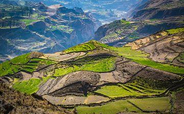 Terrassen landschap naast Colca Canyon, Peru van