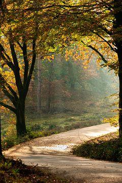 Lumière du soleil sur le chemin forestier