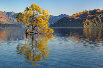 Lake Wanaka bij zonsopgang, Nieuw-Zeeland van Markus Lange