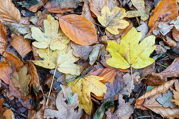 Hefstbladeren van Antoine Ramakers