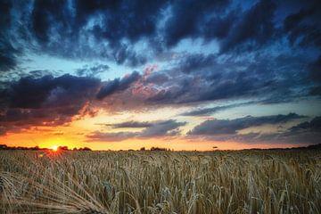 Zonsondergang in het koren sur