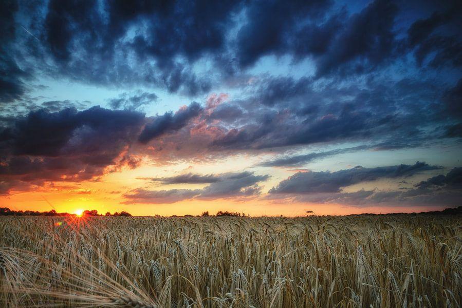 Zonsondergang in het koren
