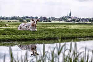 Boskoop the Netherlands