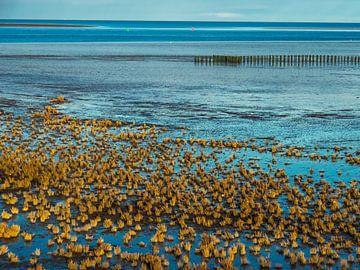 Das Wattenmeer