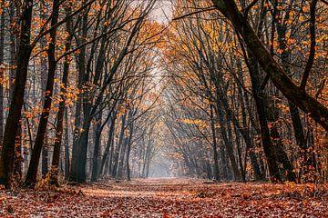 Autumn sur Bert Heuvels