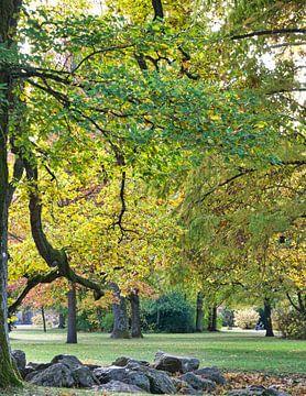 groene boom in het najaar van Frank Kebschull