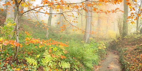 herfstbos van
