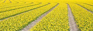 Linien in einem Panorama von Glühbirnen Feld von eric van der eijk