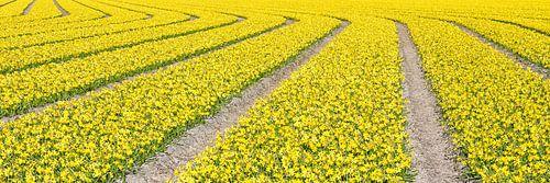 lijnenspel van bloemen in panorama van