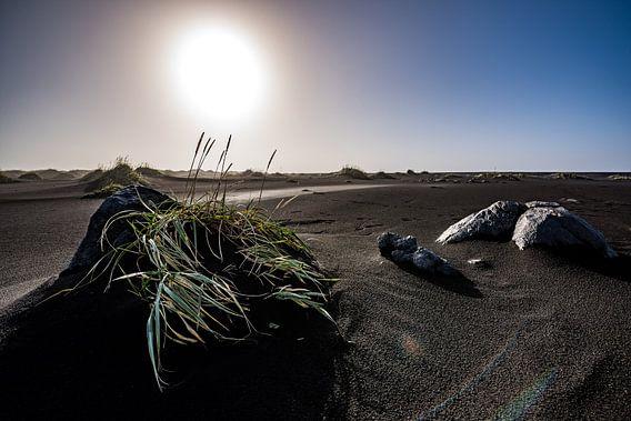 IJsland - strand bij Vestrahorn