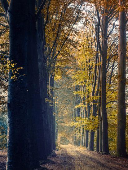 Transitions 1/3 (Herfst impressie) van Remco Lefers
