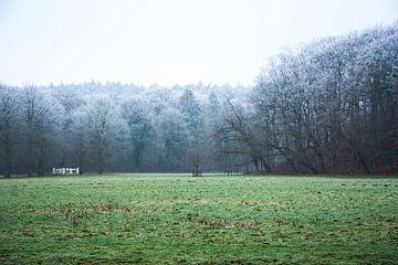 Rijp op de bomen von Michiel Boer