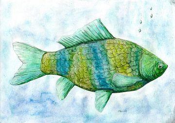 Vis van Sandra Steinke