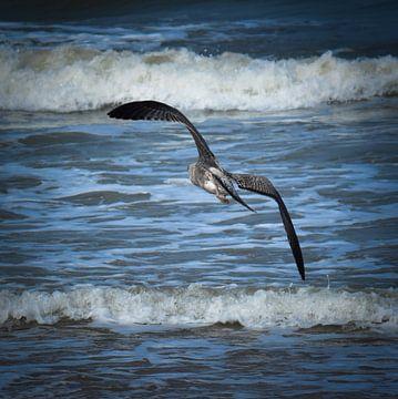 Vliegende vogel over de zee  von Jolien Luyten