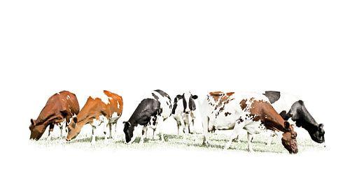 Koeien in stijlvol minimalistisch landschap van Color Square