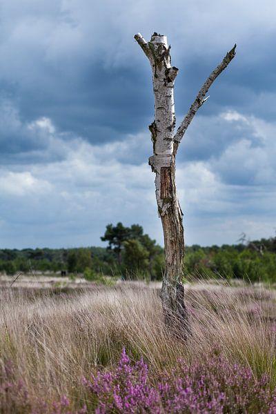 Dead tree van Elly Damen