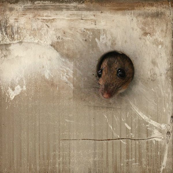Maus van Heike Hultsch